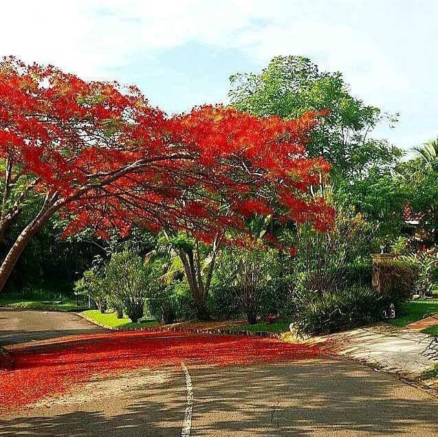 49 Best Playas El Salvador Images On Pinterest: 57 Best Images About Good Things About El Salvador On