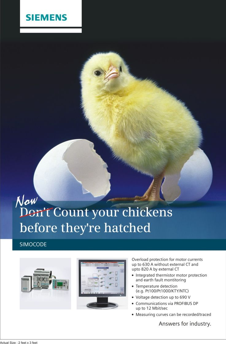 NOW, Count your chicken's before they are hatched.