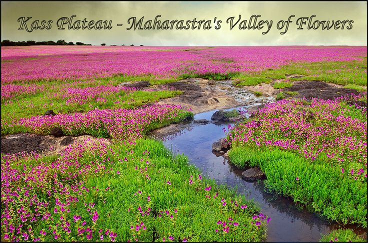 kaas_flower_stream_2+copy.jpg (1006×667)