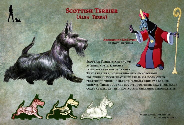 This is an orthographic study I did of the Scottish Terrier breed. I love this breed, so it was a fun project. The character was inspired by the name of my mother's dog when she grew up, 'Archbisho...