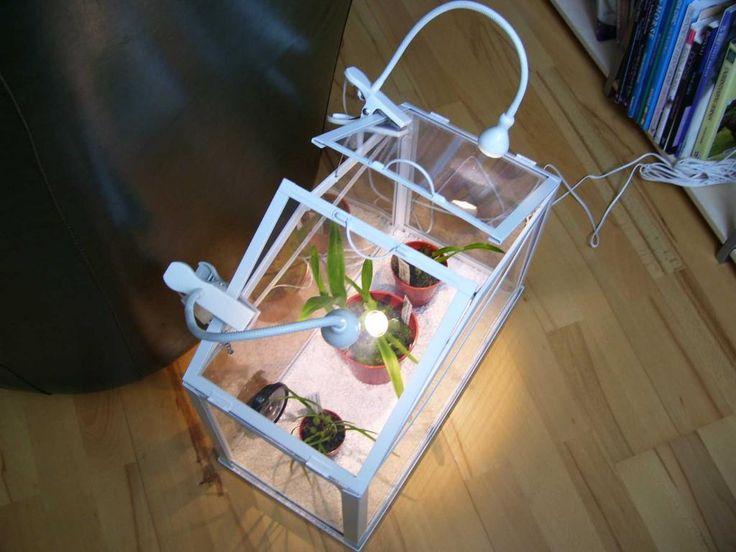 Socker Greenhouse orchid - Google keresés