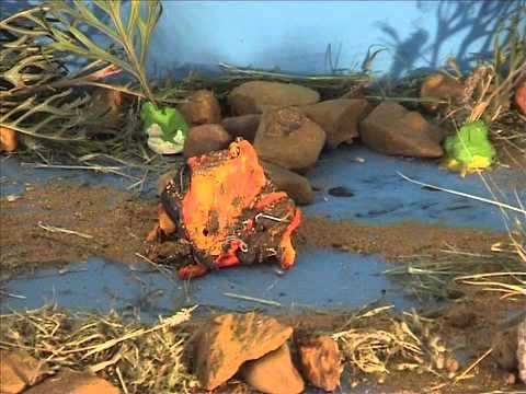 A Noonkanbah dreamtime story told in claymation.