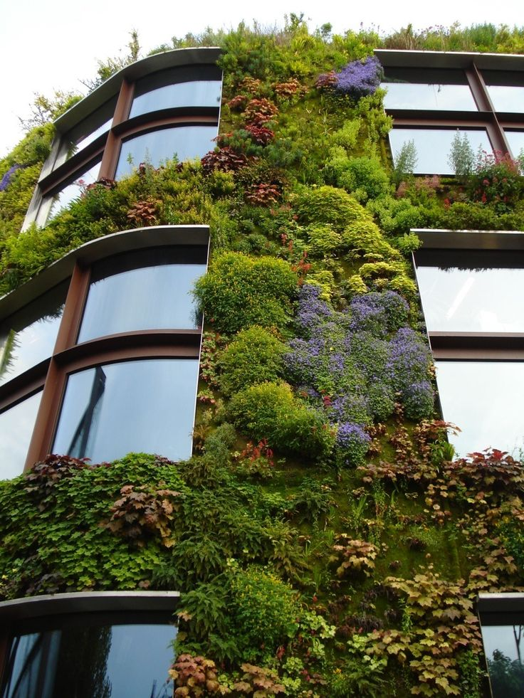 vertical garden and curved windows - I love all the different textures and colors- more places should look like this. Beautiful
