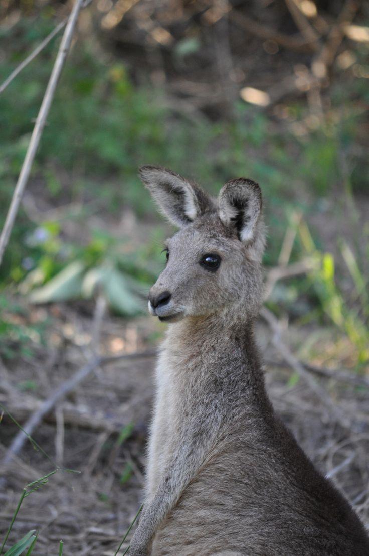 Coombabah Lakelands Reserve, Northern Gold Coast