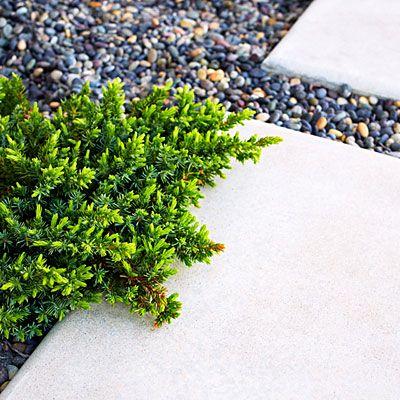 Silvery carpet - Beach Patio Design Tips - Sunset
