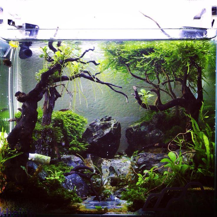 Aquascape Plants For Sale: 573 Best Aquariums / Aquascapes Images On Pinterest
