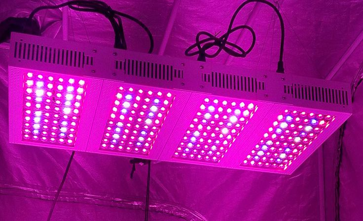 Best LED Grow Lights on the Market