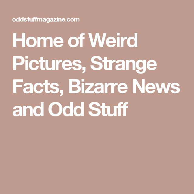 Home of Weird Pictures, Strange Facts, Bizarre News and Odd Stuff