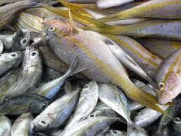 """Résultat de recherche d'images pour """"photos marché de poissons martinique"""""""