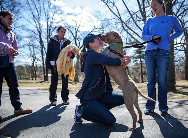 This story is about a woman who rescues pit-type dogs.