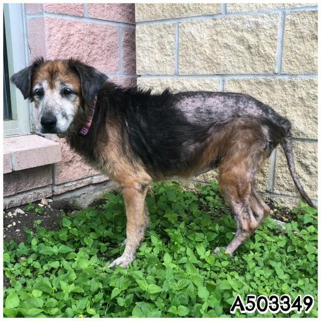 San Antonio Texas Very Urgent Www Petharbor Com Pet Sant A503349