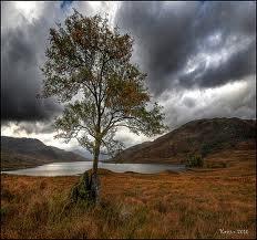 Arklet tree - the lonely Rowen tree