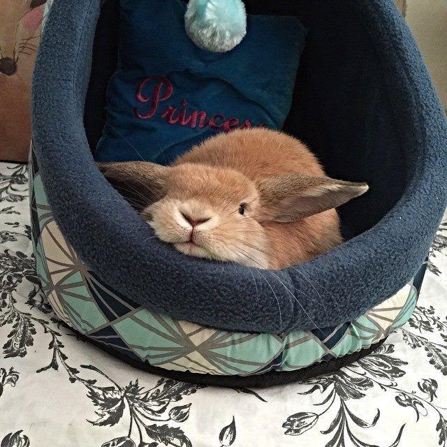 Bunny Bedtimeeee