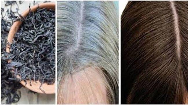 ولا شعرة واحدة بيضاء علاج شيب الشعر نهائيا وللأبد من غير صبغة القضاء على الشيب المبكر التخلص من الشعر الابيض نهائيا Hair Styles Hair Beauty