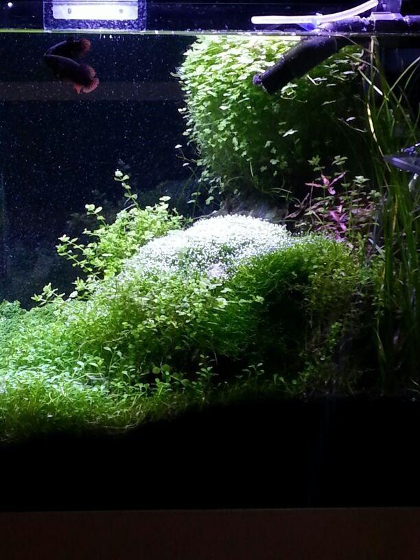 Fresh Water Aquarium with SICCE Illumination system