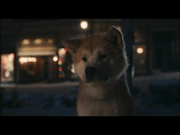 Hachiko is the endearing true story of the special friendship between a man and his dog in Japan. A story so profound that it was made into a modern day movie. Every day, Hachiko would run to the train station to greet his owner. Until one day his owner did not come off the train...he continued to show up a the train station EVERY DAY for 9 years. What an amazing creature of God. Grab the tissues for this one.