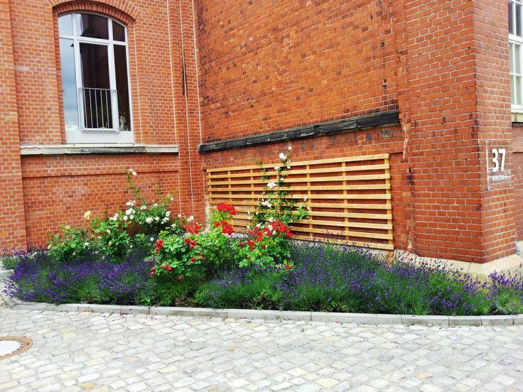 Das Dragonercarrée in Hannover List Vahrenwald: Außenanlage mit Rosen und Lavendelblüte vor der ehemaligen Reit-/ Fechthalle - aufgenommen vom Makler in Hannover: arthax-immobilien.de