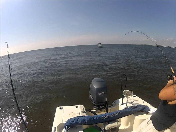 34 best jacksonville fishing images on pinterest fishing for Blue fish jacksonville