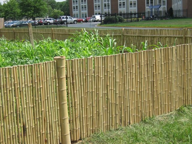 95 Best Cheap Fence Ideas Images On Pinterest Garden