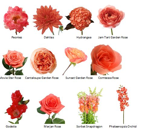 A guide to Coral flower choices for a themed wedding                                                                                                                                                                                  More