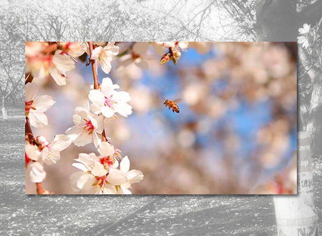 Arizona Honey BEES with California ALMONDS?? Learn more:    #organic #raw #vegan #paleo #almonds #california #health
