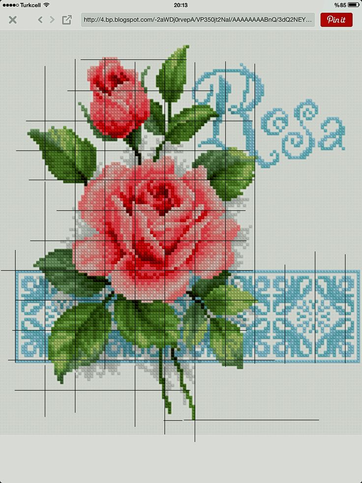 Rosa cross stitch