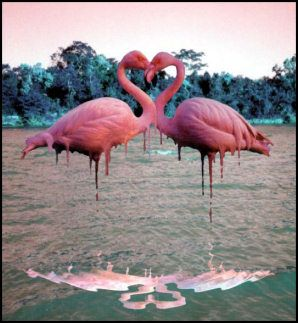 flamingos forming a heart