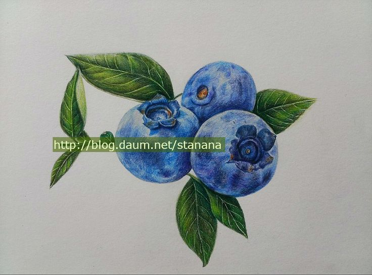 #blueberry drawing #blueberry colored pencil drawing # ...