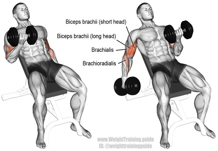The incline dumbbell curl targets your biceps brachii, emphasizing the long (or outer) head. Your brachialis and brachioradialis act as synergists.     All the guys wear this too.  ;)