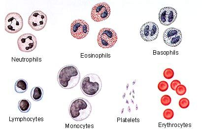 Natural Remedies For High Red Blood Cell Count