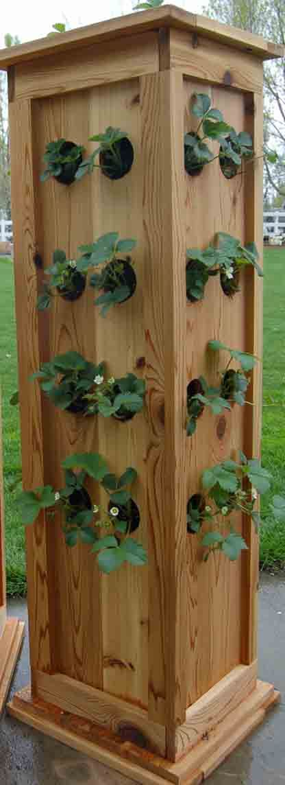 Strawberry Garden Ideas clay pots tend to crack with the freeze thaw Best 25 Strawberry Planters Ideas On Pinterest Strawberry Tower Traditional Garden Hoses And Strawberry Plants