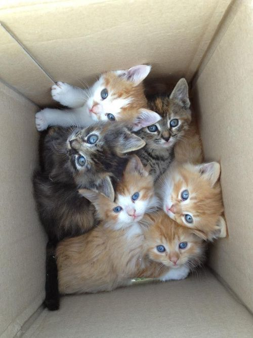 Box o' kitties!