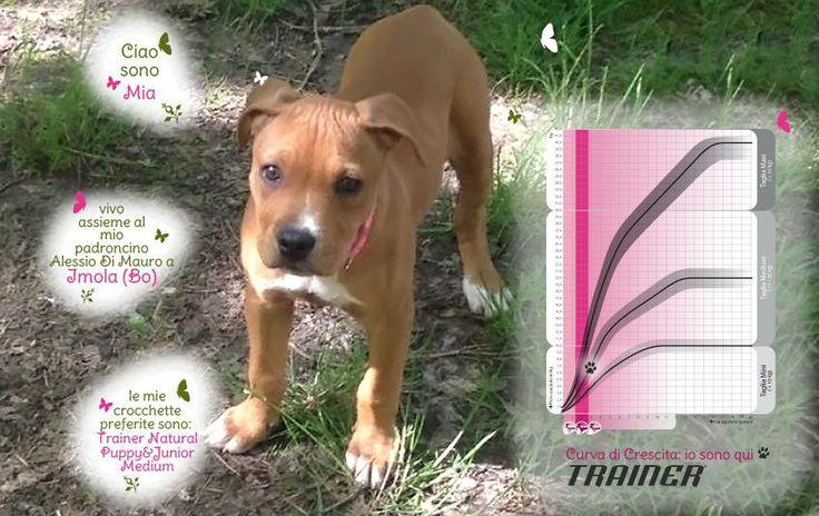 Ciao a tutti! Sono Mia e ho 3 mesi. Vivo a Imola (Bo) assieme al mio padroncino Alessio Di Mauro. Sto crescendo bellissima (modestamente) grazie alle sue attenzioni ed alle mie crocchette preferite: Trainer Natural Puppy&Junior Medium! Un saluto a tutti!