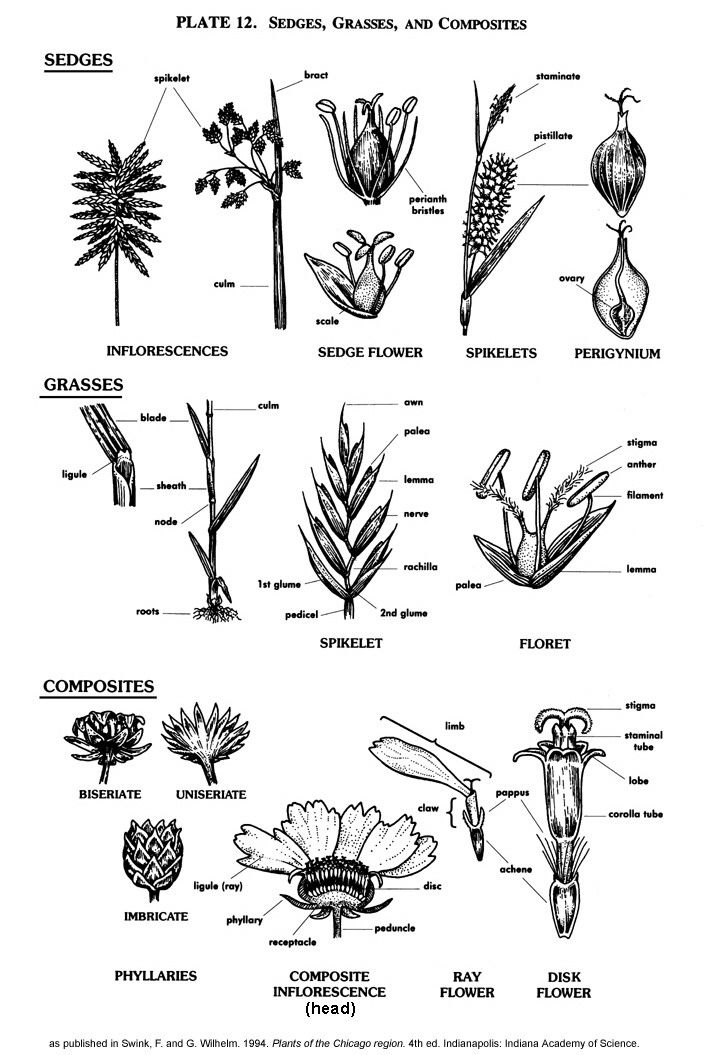 20 best plant id images on pinterest botany nature and nature study line drawings of plant features ccuart Gallery