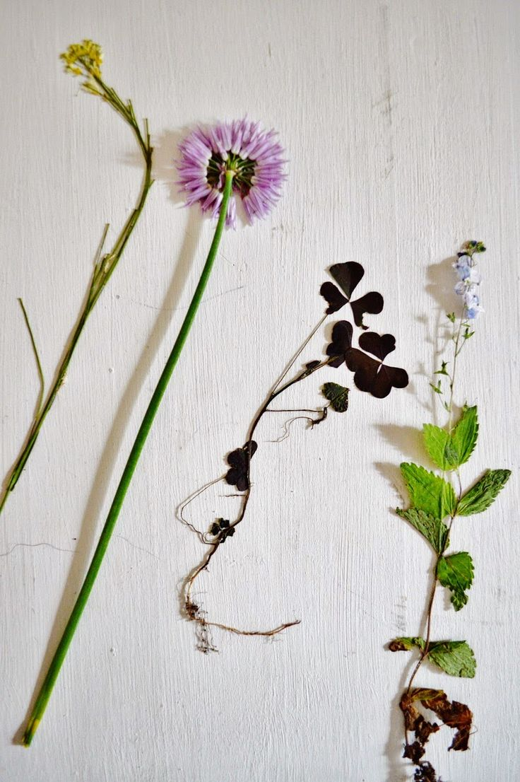 I dried some flowers I picked in our yard.  They make a beautiful DIY project when you put them in a frame <3