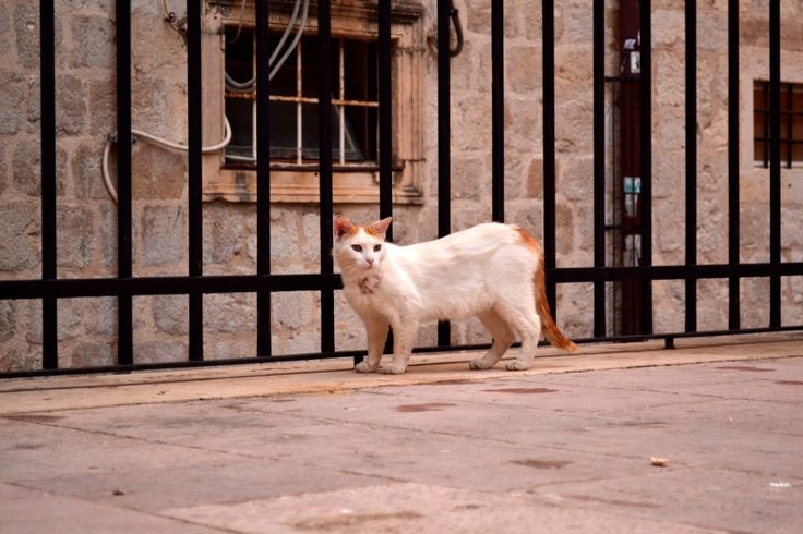 Stray cat in Dubrovnik, Croatia