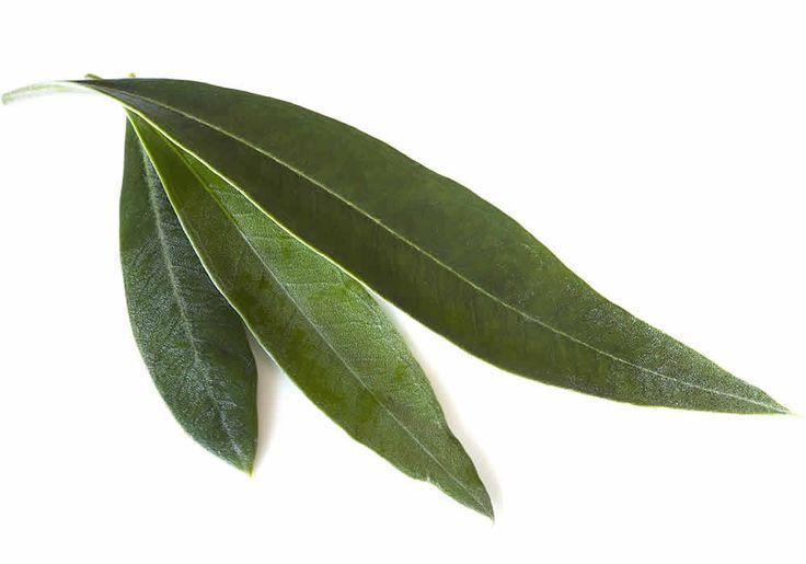 Ρυθμίστε την πίεσή σας με φύλλα ελιάς