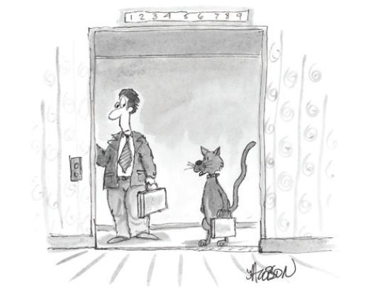 Modern Cat Cartoon Caption Contest | Modern Cat magazine