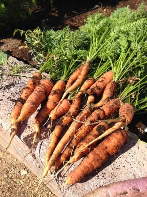 15 Best Companion Planting Images On Pinterest Growing 400 x 300