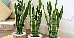 El antes y el después de un hogar con plantas de interior