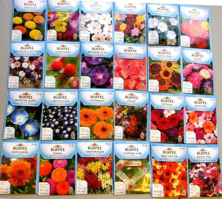 Burpee Seeds  FLOWERS  * 24 NEW PACKS  *   Packaged for 2015  FREE Shipping  $$$
