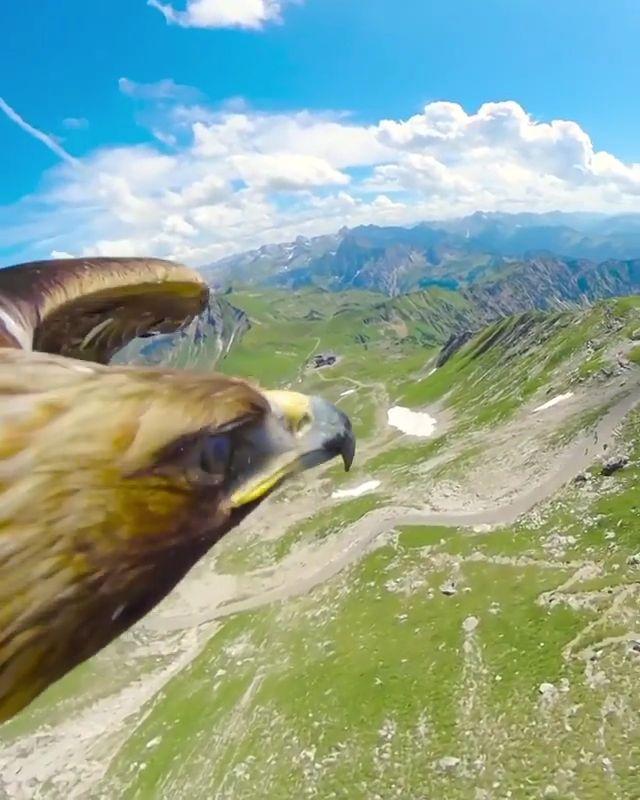 Вид с птичьего полета Буквально! Подпишись на телеграм-канал по ссылке