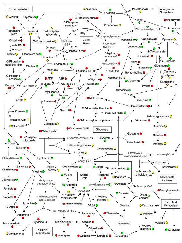 Metabolite linkage map re... - Yale Image Finder