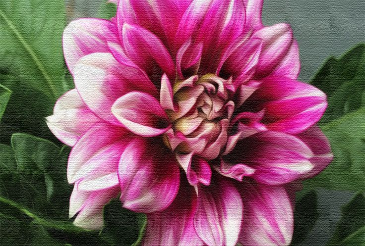 The beauty of a Dahlia.