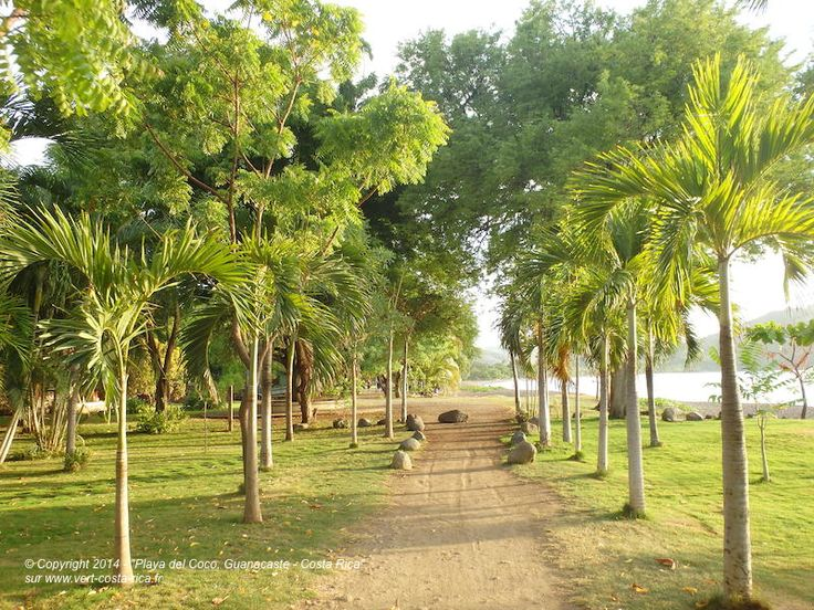 Découvrez la ville de Playa del Coco qui se trouve à seulement 25 km de l´aéroport de #Liberia, au sud du Golfe de Papagayo, et à une heure de route de Tamarindo ou de Brasilito, cliquez ici : http://www.vert-costa-rica.fr/guanacaste/playa-del-coco #playadelcoco #guanacaste #costarica
