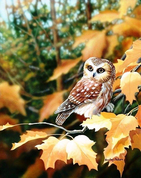 Анимационные картинки совы утром, квиллинг открытки