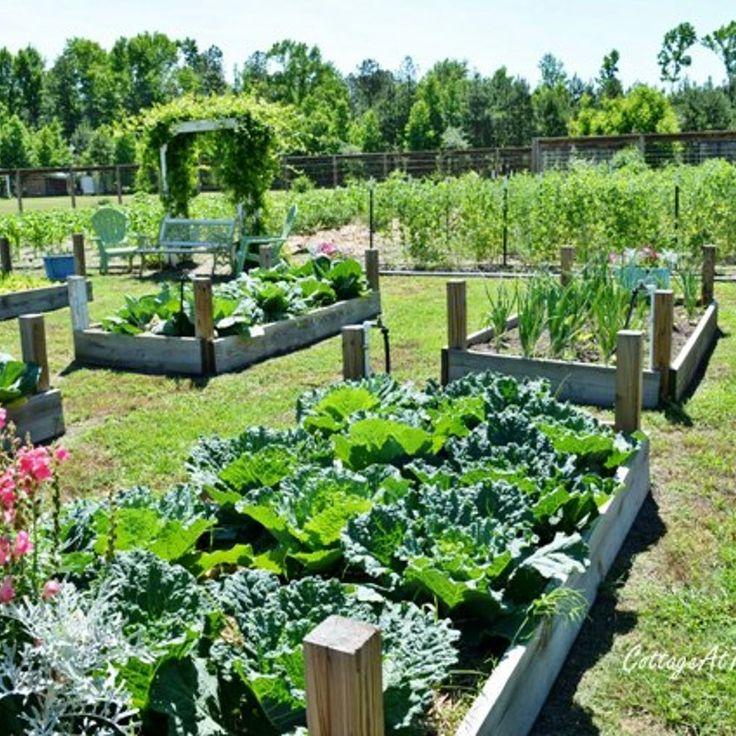 67 best images about vegetable garden on pinterest   backyard, Gartenarbeit ideen