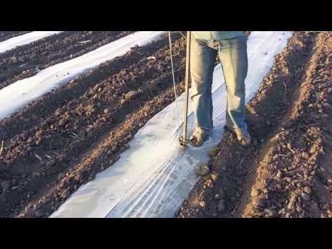 Технология выращивания огурца с применением различных методов. - YouTube