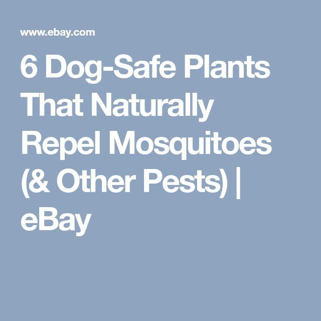 42 best terrain terrariums images on pinterest air for Dog safe houseplants