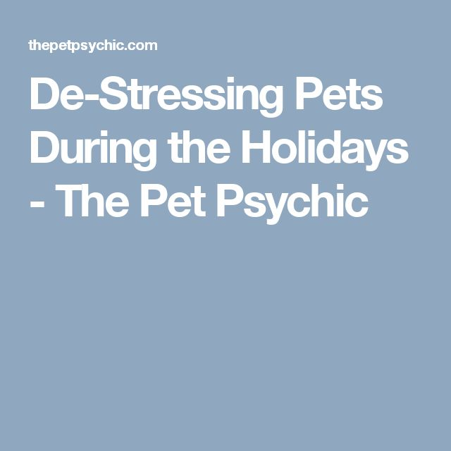 De-Stressing Pets During the Holidays - The Pet Psychic
